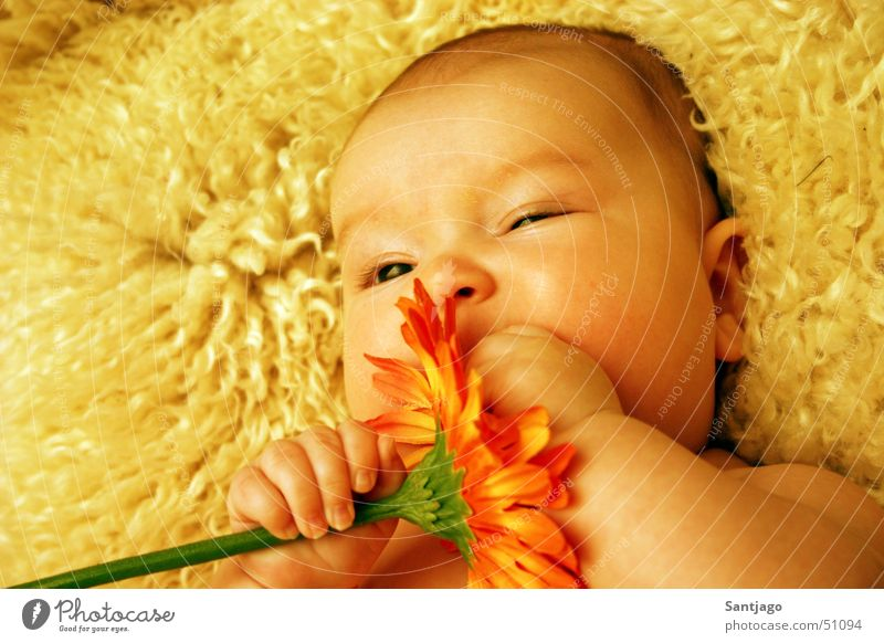 flower baby Baby Toddler Flower Sweet Portrait photograph