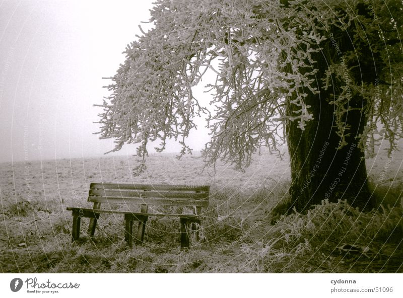 Tree with bench Cold Meadow Winter Fog Impression Moody Calm Romance Black & white photo Bench Hoar frost Frost Branch Snow Landscape
