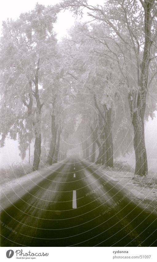 street Stripe Winter Tree Loneliness Calm Impression Avenue Traffic infrastructure Black & white photo Street Snow Frost Hoar frost Landscape Perspective Line