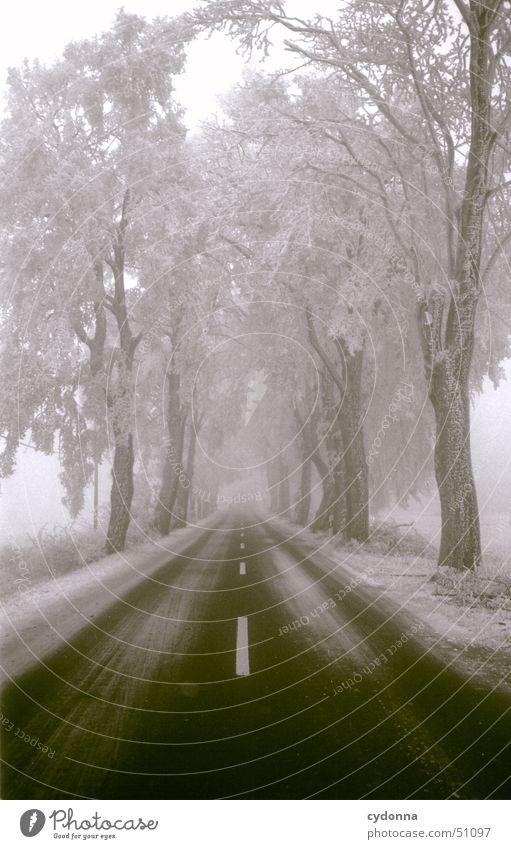 Tree Winter Calm Loneliness Street Snow Landscape Line Perspective Frost Stripe Traffic infrastructure Avenue Hoar frost Impression