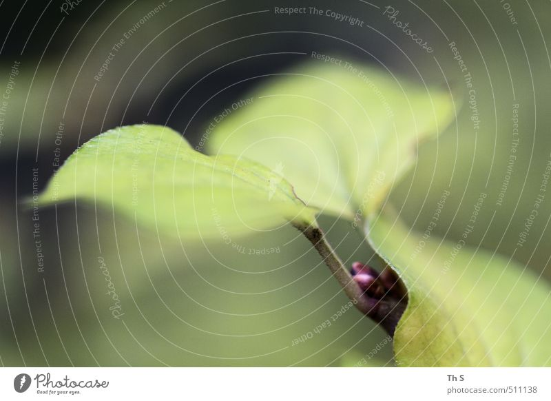 Nature Green Colour Relaxation Leaf Forest Freedom Esthetic Harmonious