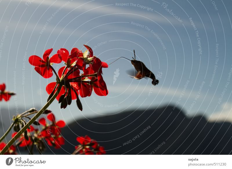 Sky Nature Blue Plant Red Flower Animal Mountain Autumn Blossom Flying Insect Butterfly To feed Suck Pot plant