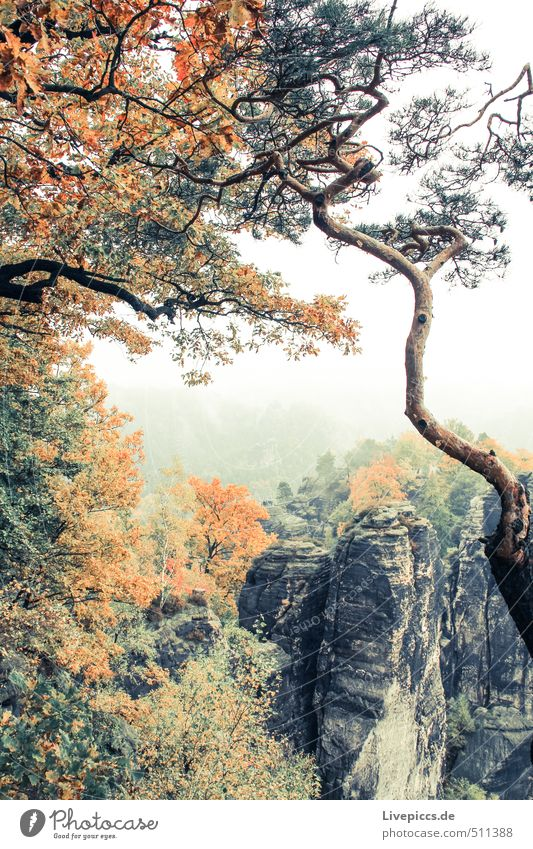 Sky Nature Vacation & Travel Green Plant Tree Landscape Calm Clouds Environment Mountain Autumn Gray Wood Above Stone