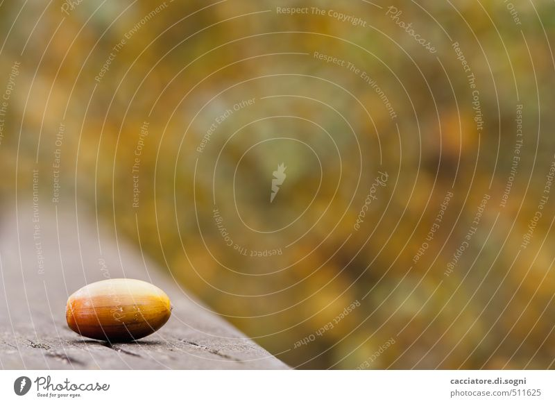 What remains is uncertainty Environment Autumn Beautiful weather Acorn Park Simple Small Brown Green Orange Serene Calm Thrifty Concern Homesickness