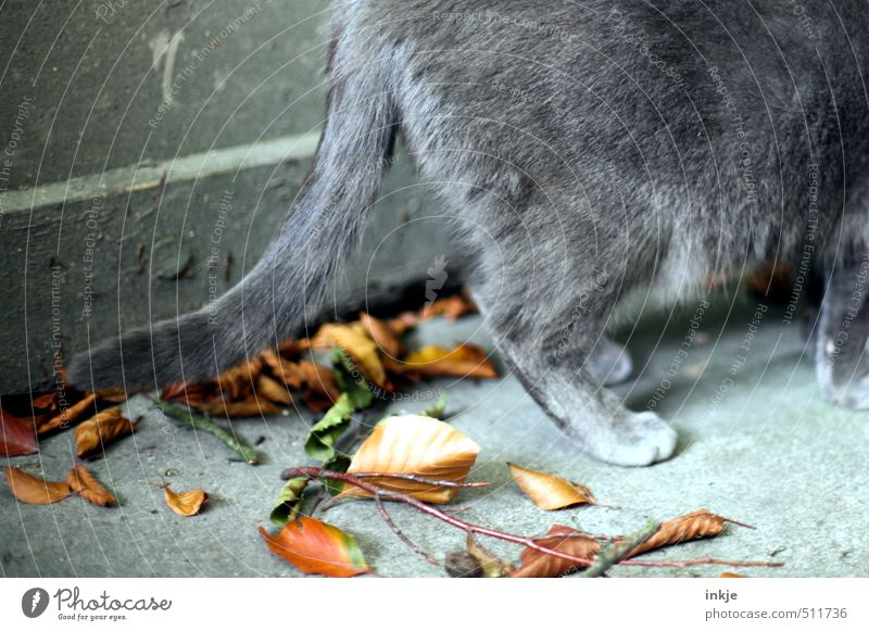Cat Nature Leaf Animal Environment Wall (building) Autumn Wall (barrier) Gray Garden Brown Change Branch Pelt Autumn leaves Domestic cat