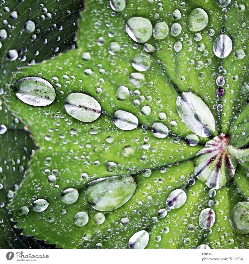 Plant | drunk Water Drops of water Spring Bad weather Rain Leaf Foliage plant Park Fluid Wet Round Green Life Orderliness Design Identity Center point