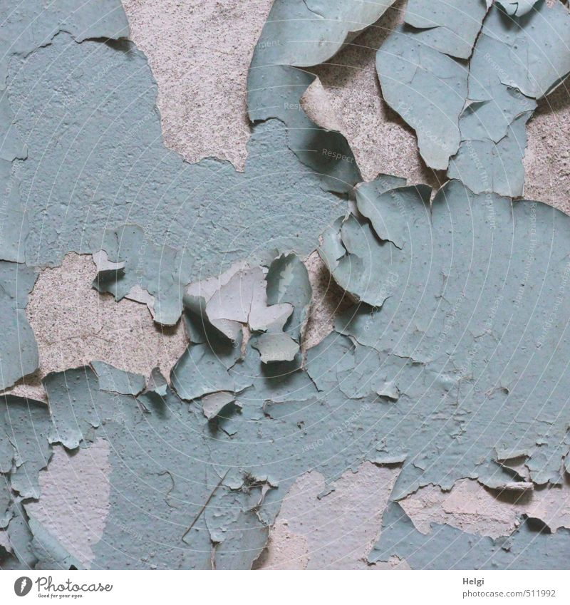 AST5. The paint's off... House (Residential Structure) Wall (barrier) Wall (building) Paints and varnish Plaster Old Living or residing Authentic Exceptional