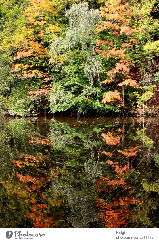 Nature Green Water Plant Tree Red Landscape Calm Leaf Yellow Environment Life Autumn Natural Brown Moody