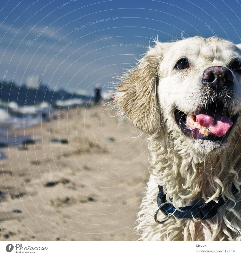Dog Nature Joy Beach Environment Life Emotions Coast Playing Swimming & Bathing Friendship Waves Blonde Perspective Happiness Communicate
