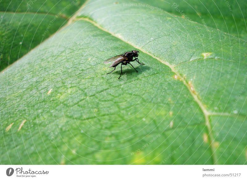 Nature Green Calm Leaf Black Animal Colour Wait Fly Monochrome