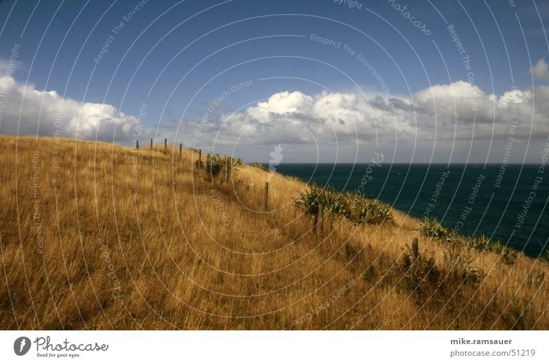 on the hill Grass Meadow Fence Ocean Coast New Zealand brown grass