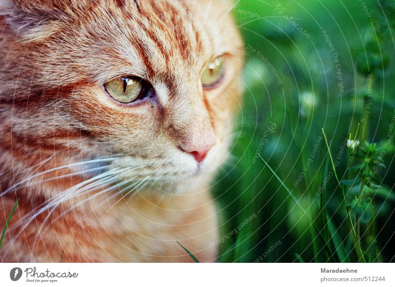 rental pamphlet Hunting Nature Spring Summer Beautiful weather Plant Grass Bushes Garden Meadow Village Outskirts Animal Pet Cat 1 Observe Think Sit Stand
