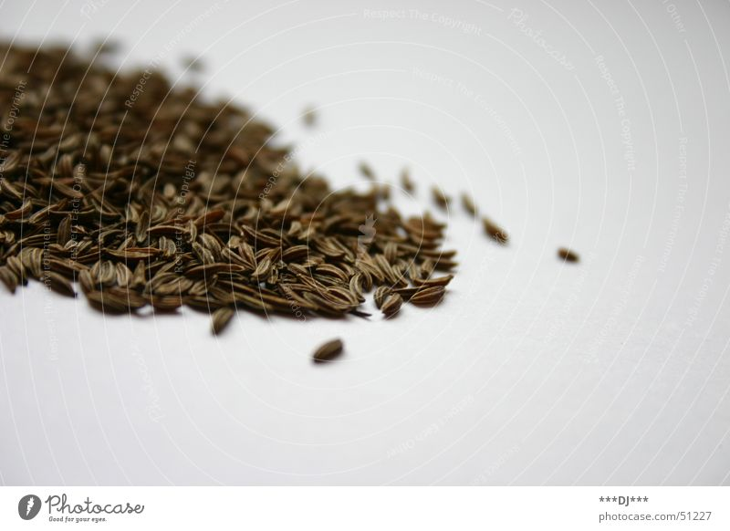 Nutrition Brown Herbs and spices Grain Copy Space Seed Heap Ingredients Refine Cumin Food photograph Bright background