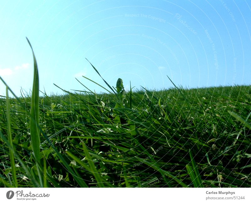 Sky Sun Green Blue Summer Joy Relaxation Meadow Jump Grass Spring Lawn Beautiful weather Sky blue Spring fever Light blue