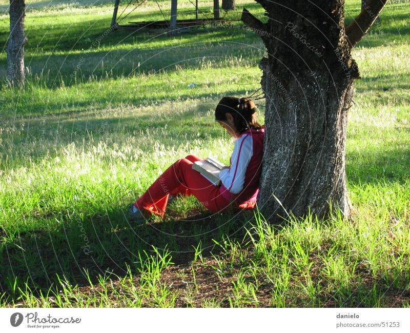 Silent time Calm Book Bible Reading Prayer Deities Meadow Tree Light Girl Nature Human being God Morning Loneliness quitness lonely grass