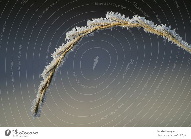 White Blue Winter Calm Cold Grass Gray Ice Sleep Growth Frost Frozen Blade of grass Seed Beige Hoar frost