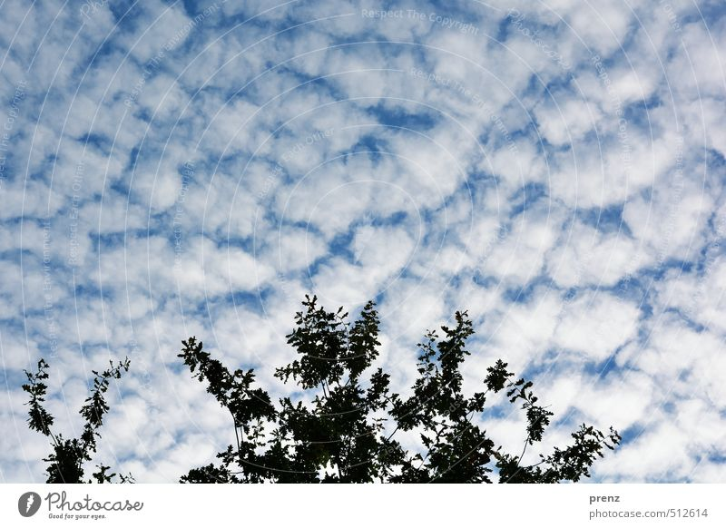 Sky Nature Blue White Clouds Environment Autumn Weather Beautiful weather Twig Oak tree