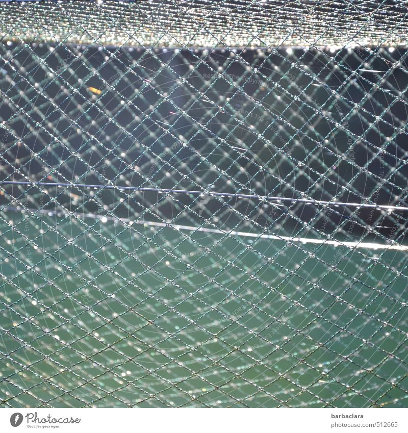 glamorous Environment Nature Drops of water Meadow Forest Fence Wire netting Metal Illuminate Fresh Glittering Many Wild Green Silver Bizarre Network Protection