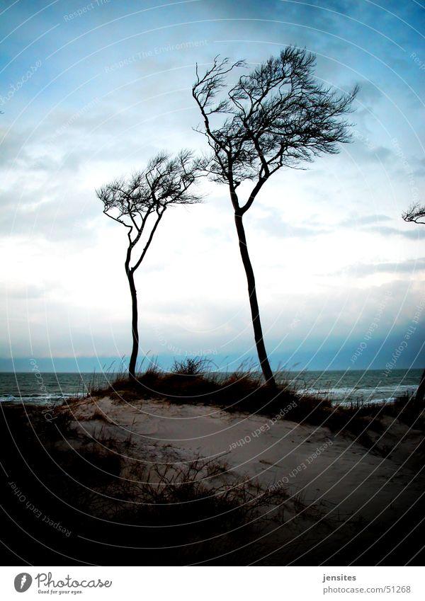 Baltic Sea Palms II Tree Wind cripple Ocean Beach Calm Winter Gray Germany Branch Dynamics Nature Movement Sky Blue