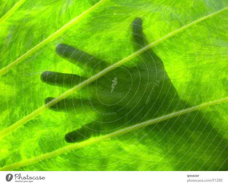 touching the sun Light Summer Hand leaf abstract god