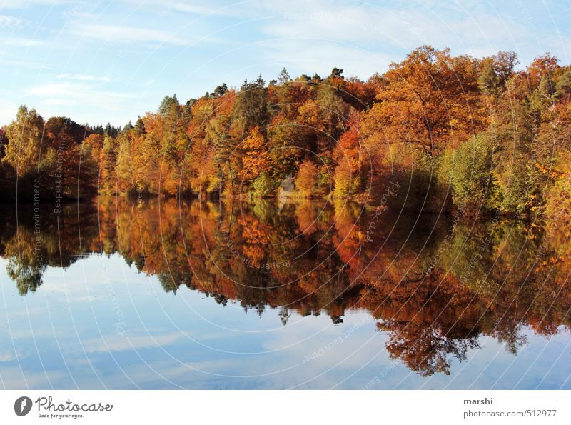 Nature Landscape Forest Autumn Coast Lake Moody Beautiful weather Lakeside Autumnal Mirror image