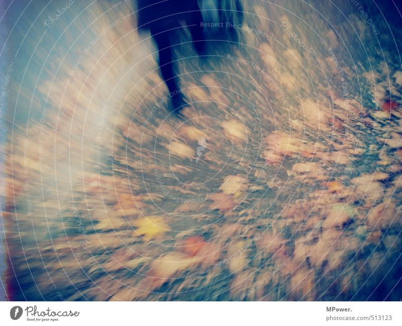 moved Feminine Legs Feet 1 Human being Running Movement Walking Brown Orange Autumn leaves Going Lanes & trails Leaf Blur Abstract Colour photo Subdued colour
