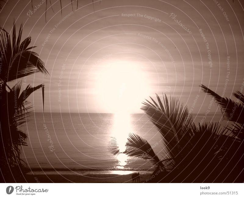 Water Sun Ocean Beach Island Palm tree Dusk Philippines Puerto Galera Marine Reserve