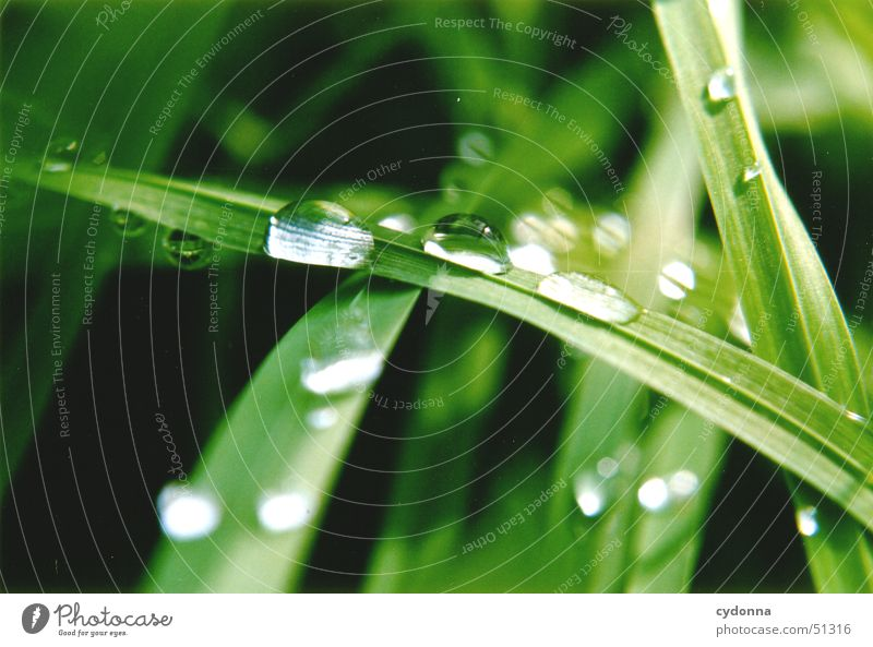Nature Water Beautiful Green Meadow Grass Drops of water Rope Blade of grass Rainwater