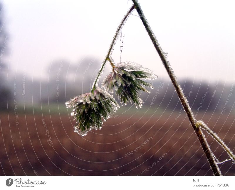 Nature Flower Plant Winter Landscape Ice Frost Damp
