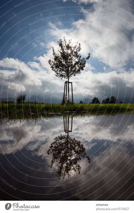 mirror growth Trip Environment Nature Landscape Plant Water Sky Clouds Horizon Weather Tree Grass Garden Meadow Field Pond Lake Growth Small Protection Feeble