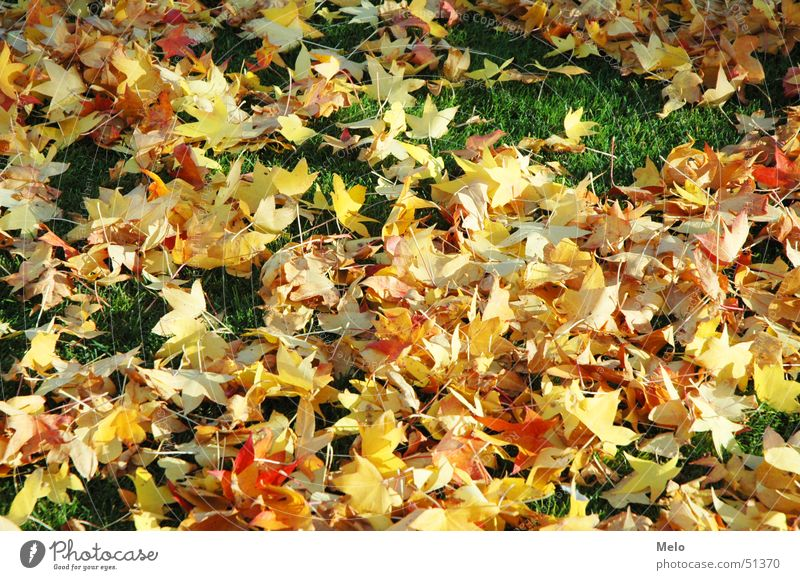 Green Red Leaf Yellow Autumn Grass Orange