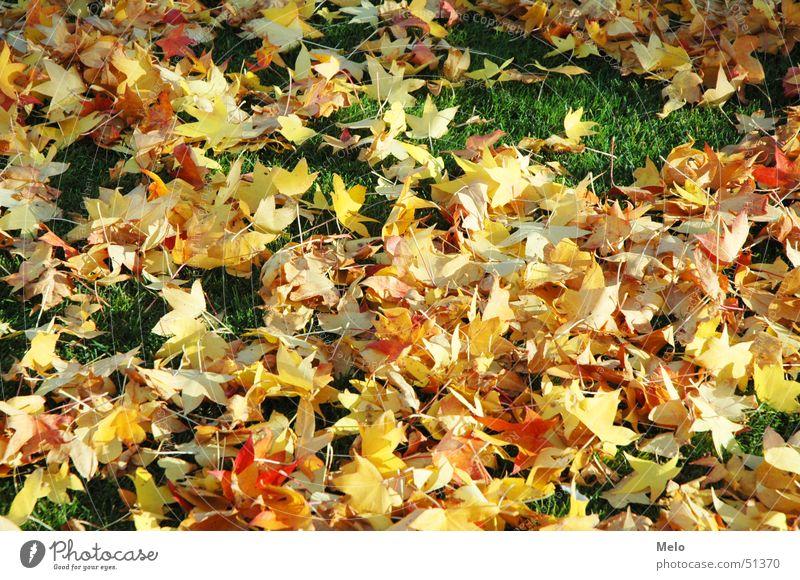 Green Red Leaf Yellow Autumn Grass Orange