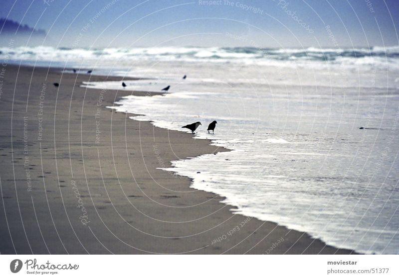 blackbirds Beach Raven birds Bird Ocean Fog Oregon Cannon Beach Water Sand
