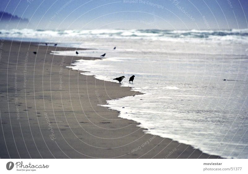 Water Ocean Beach Sand Bird Fog Raven birds Oregon Cannon Beach