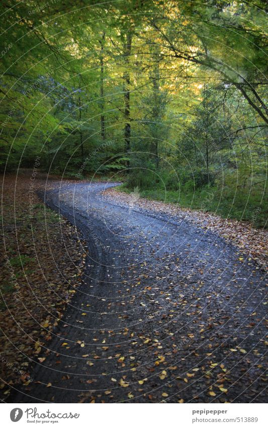 (go)away Trip Hiking Nature Landscape Earth Autumn Weather Beautiful weather Wind Plant Tree Bushes Leaf Forest Lanes & trails Dark Green Fear Exterior shot