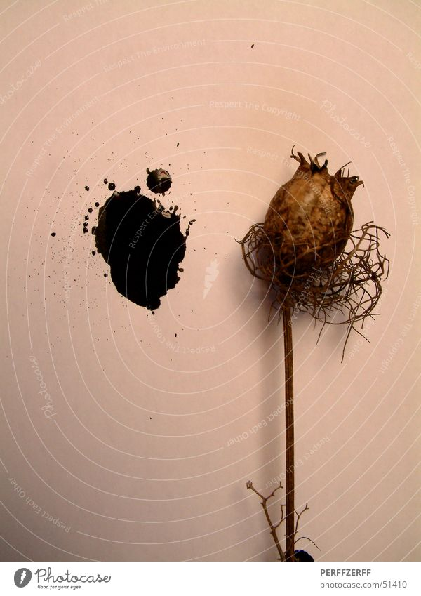 Opium for the people Plant Black Dried Stalk Shriveled perff Patch