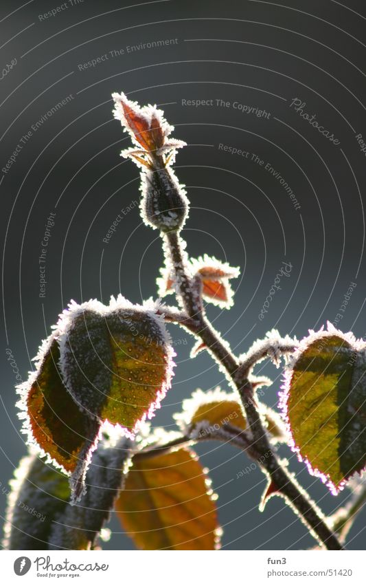 Plant Frost