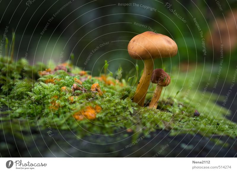 Grow in protection... Environment Nature Plant Earth Summer Autumn Climate Weather Beautiful weather Grass Moss Garden Park Forest Small Brown Green Mushroom
