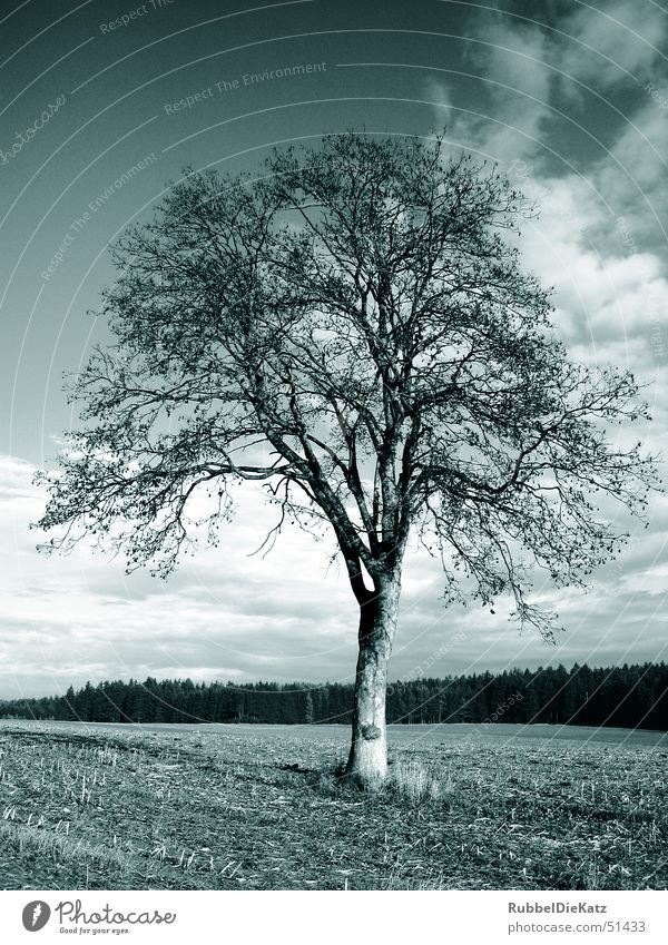 naked tree Tree Field Loneliness Clouds color cast Nature Landscape Black & white photo