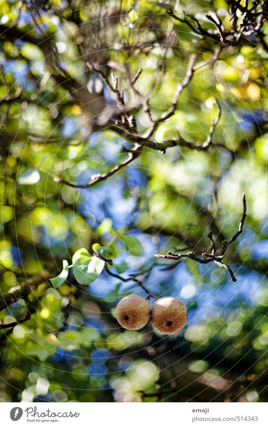 Nature Plant Tree Animal Environment Autumn Natural Healthy Fruit Fresh Pear
