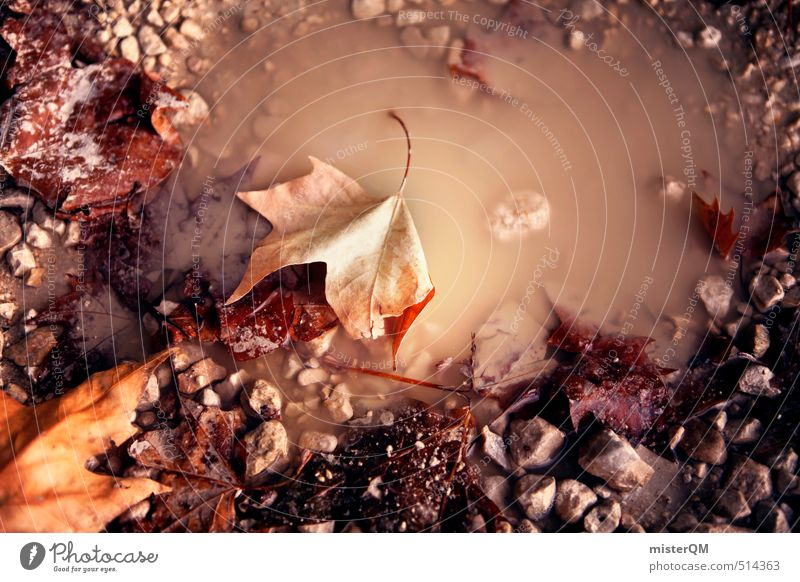 French Style XVIII Nature Esthetic Puddle Autumn leaves Autumnal Early fall Autumnal colours Autumnal weather Autumnal landscape Weather Leaf Colour photo