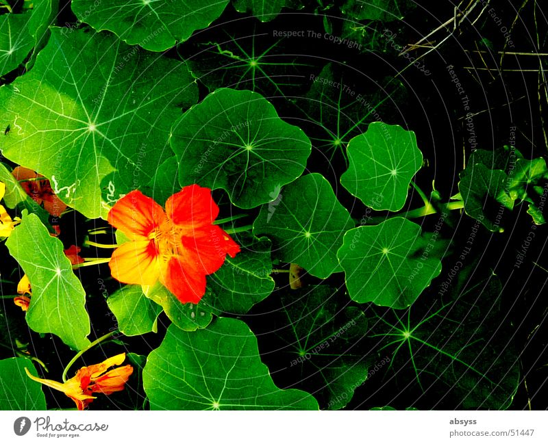 Nature Flower Green Plant Red Leaf Black Yellow Colour Meadow Landscape Line Orange Floor covering Clarity