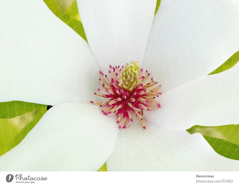 Nature Plant Beautiful Colour White Flower Red Leaf Life Blossom Dye Small Exceptional Fruit Growth Open