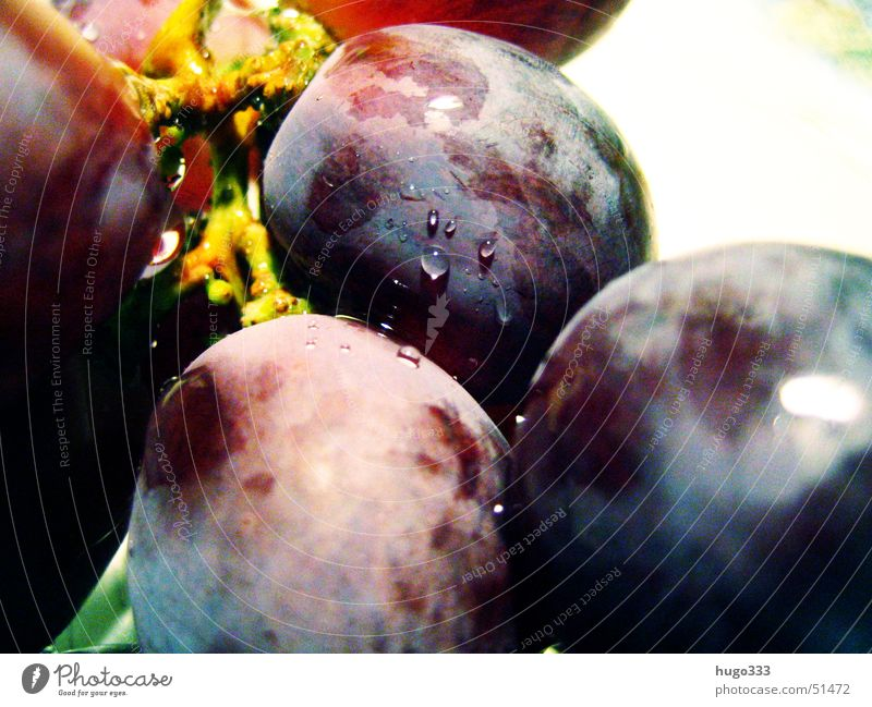 vitis vinifera Bunch of grapes Round Delicious Drops of water Damp Wet Fresh Dessert Healthy Vine Blue Fruit Macro (Extreme close-up) Water waterdrop plump