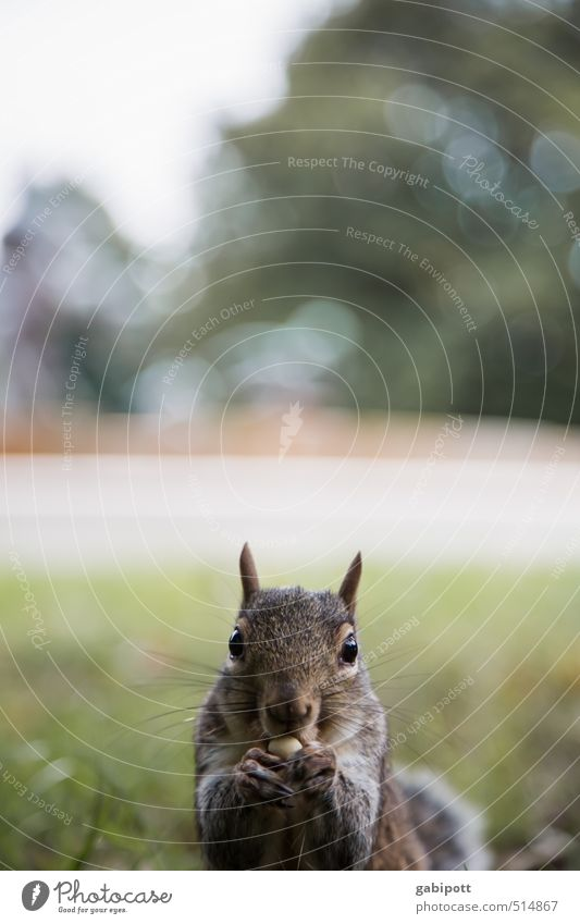 I don't care about time change. Environment Nature Plant Animal Beautiful weather Squirrel Observe Eating Friendliness Happiness Cuddly Curiosity Cute