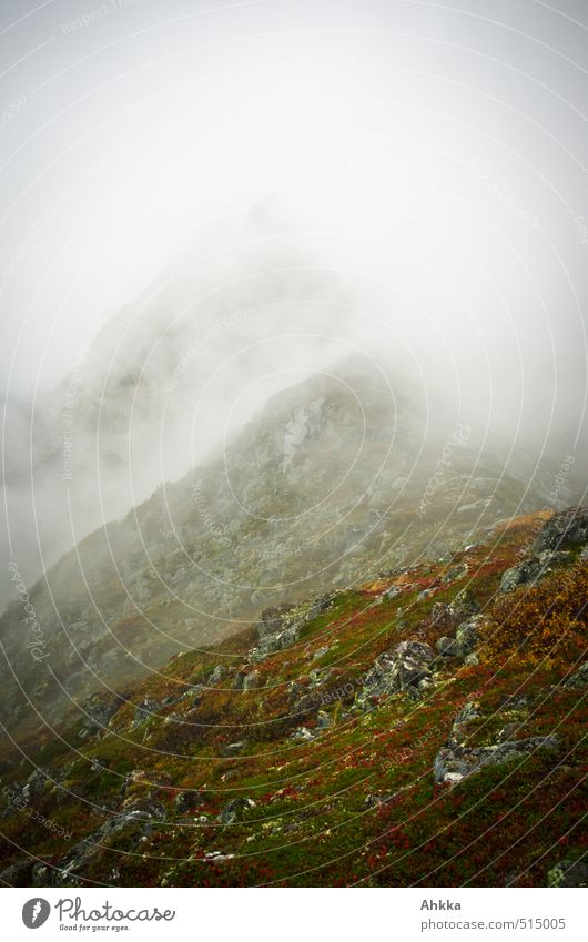 Nature Landscape Loneliness Far-off places Mountain Autumn Gray Time Freedom Moody Rain Fog Perspective Communicate Future Climate