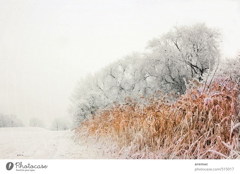 freezing cold Winter Landscape Plant Ice Frost Snow Tree Grass Bushes Meadow River bank Cold Gray Moody Calm Nature Colour photo Subdued colour Exterior shot