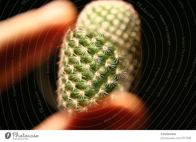 Nature Plant Black Fingers Lens Cactus Magnifying glass Thorn Houseplant