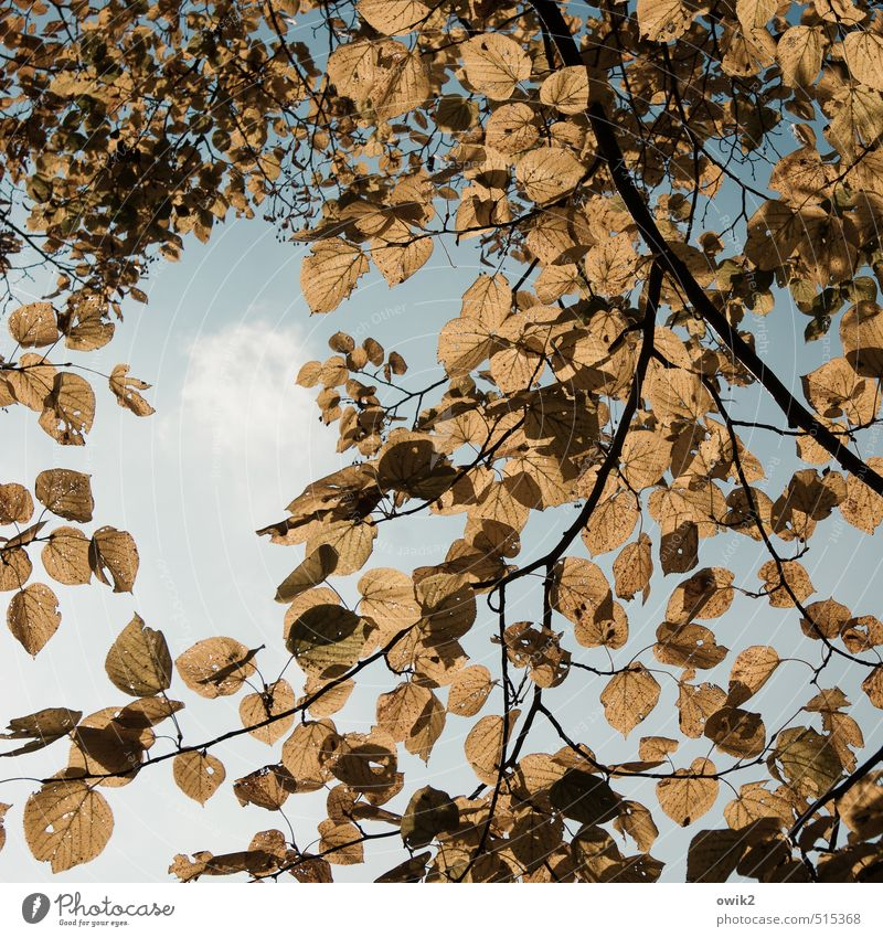 Before the fall Environment Nature Landscape Plant Cloudless sky Autumn Climate Weather Beautiful weather Tree Leaf Deciduous tree To dry up Bright Natural Dry
