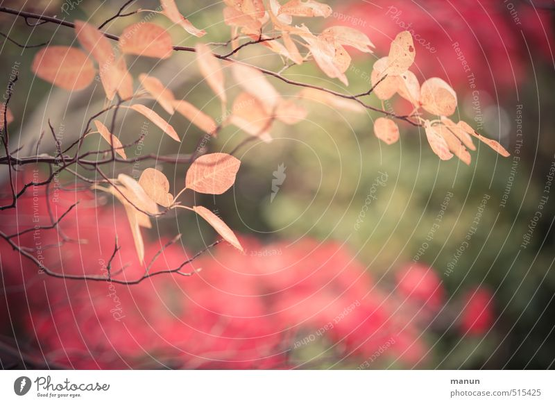 Nature Tree Leaf Autumn Bushes Beginning Transience Change Autumn leaves Autumnal Autumnal colours Early fall